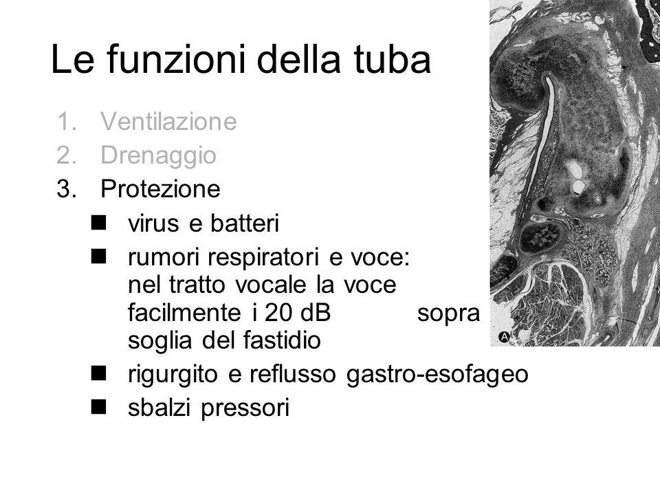 Le funzioni della tuba 1.Ventilazione 2.Drenaggio 3.Protezione nvirus e batteri nrumori respiratori e voce: nel tratto vocale la voce supera facilment