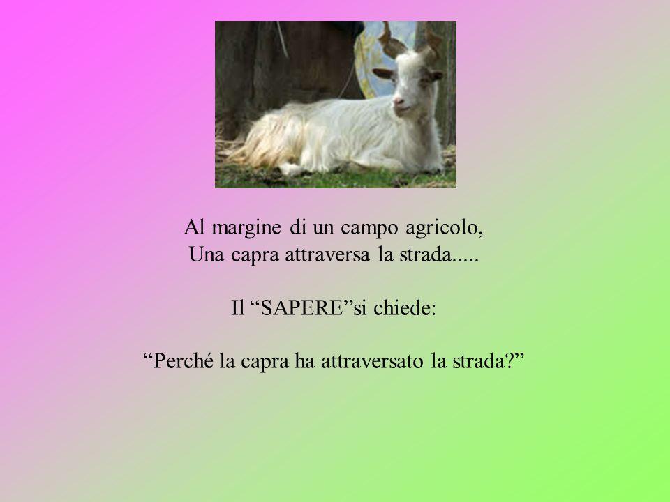 Al margine di un campo agricolo, Una capra attraversa la strada..... Il SAPEREsi chiede: Perché la capra ha attraversato la strada?