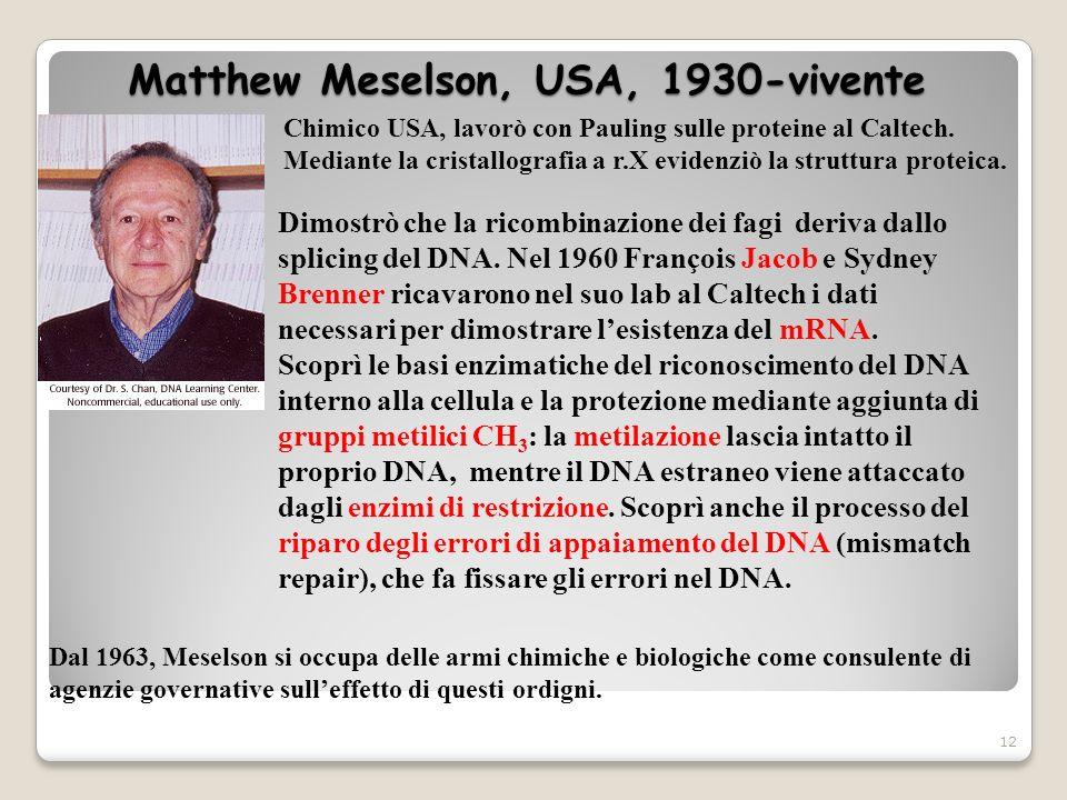 Matthew Meselson, USA, 1930-vivente 12 Chimico USA, lavorò con Pauling sulle proteine al Caltech. Mediante la cristallografia a r.X evidenziò la strut