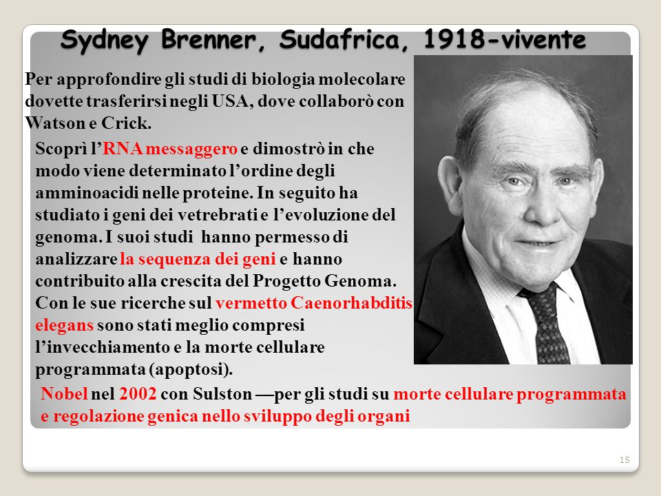 Sydney Brenner, Sudafrica, 1918-vivente 15 Per approfondire gli studi di biologia molecolare dovette trasferirsi negli USA, dove collaborò con Watson