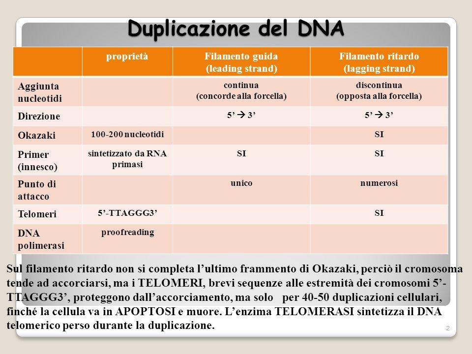 Duplicazione del DNA proprietàFilamento guida (leading strand) Filamento ritardo (lagging strand) Aggiunta nucleotidi continua (concorde alla forcella
