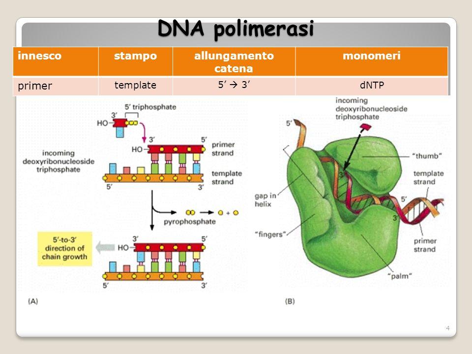 DNA polimerasi innescostampoallungamento catena monomeri primer template5 3dNTP 4