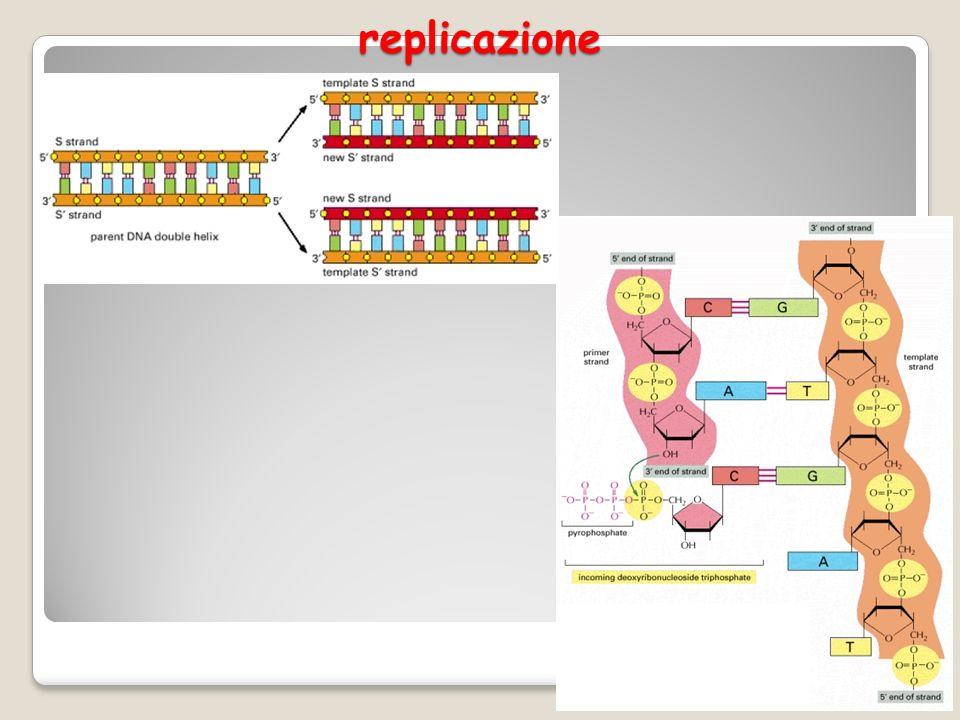replicazione 5