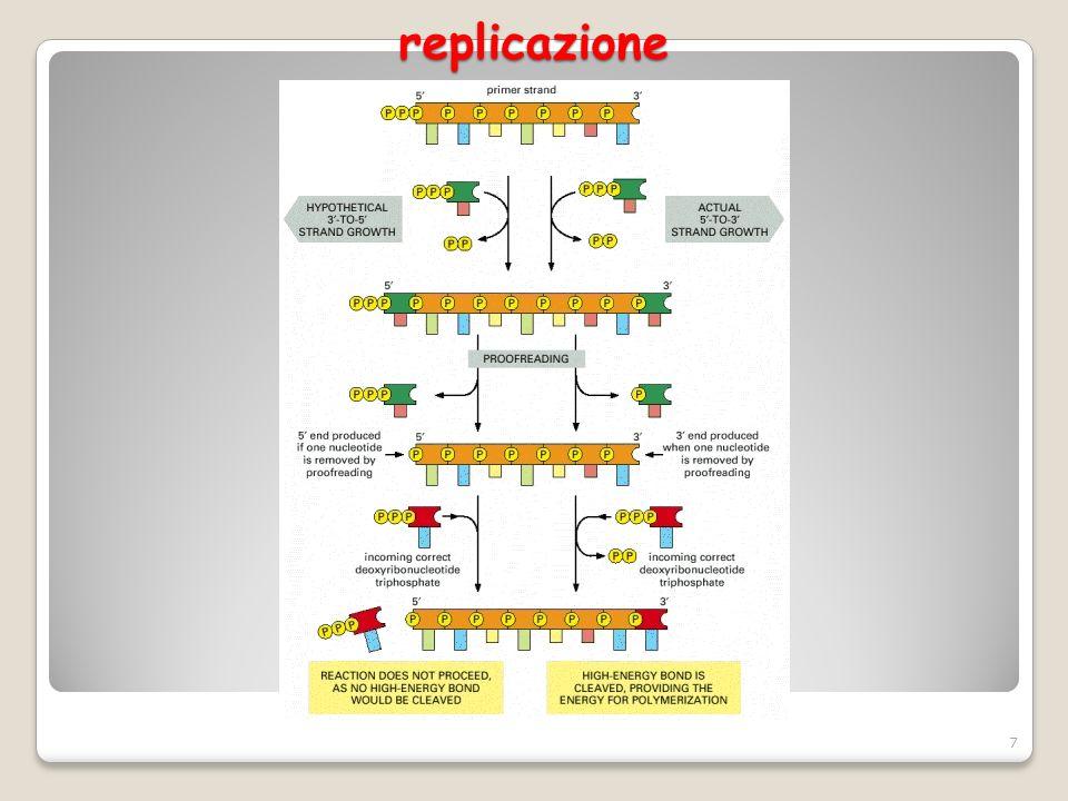 replicazione 8