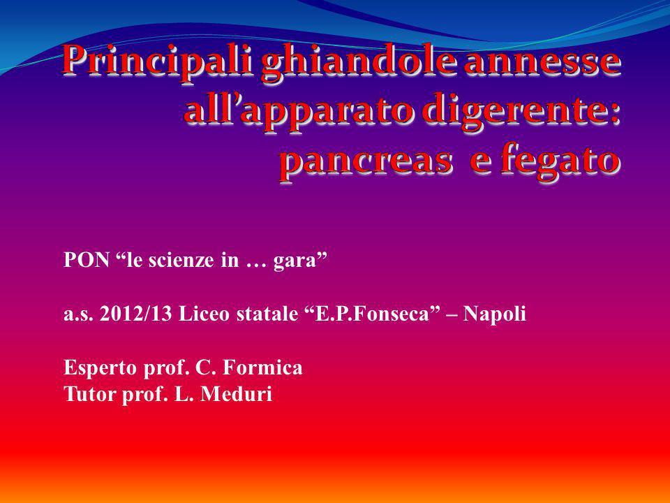 PON le scienze in … gara a.s. 2012/13 Liceo statale E.P.Fonseca – Napoli Esperto prof. C. Formica Tutor prof. L. Meduri