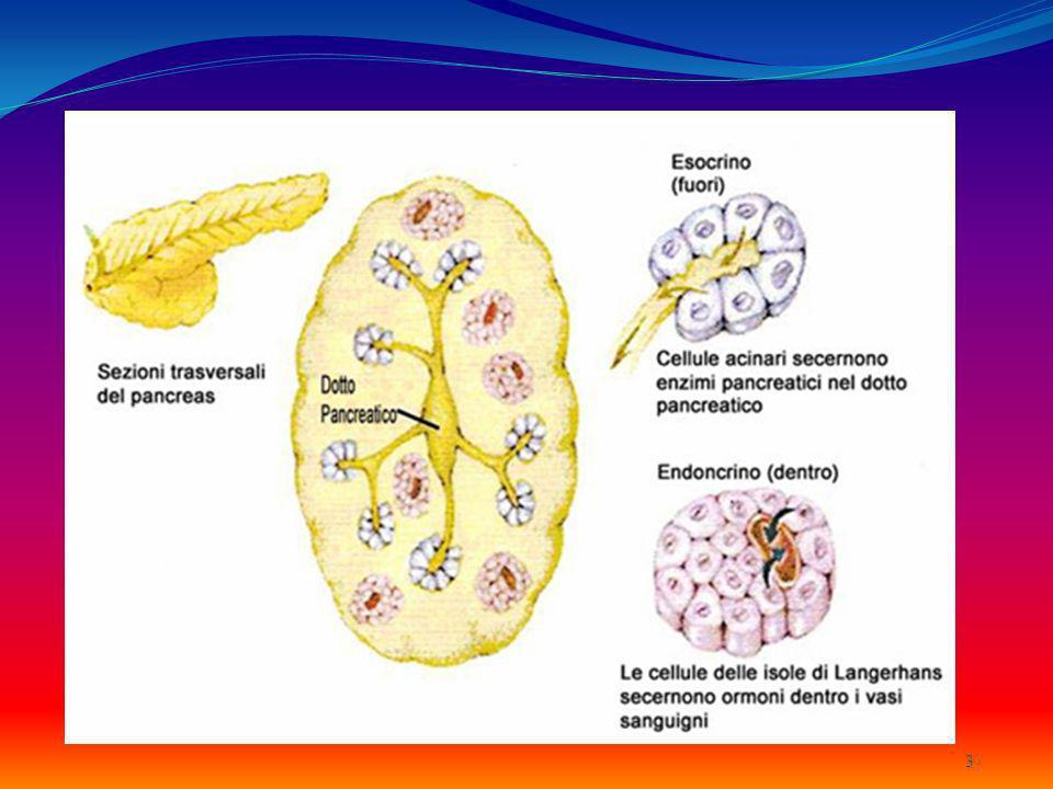 Pancreas esocrino Secrezione dei Succhi Pancreatici Secrezione dei Succhi Pancreatici Dotto pancreatico Prodotti dal pancreas esocrino e drenati allintestino tenue tramite il Dotto pancreatico Chimotripsina e tripsina Chimotripsina e tripsina Carbossipeptidasi Carbossipeptidasi Amilasi Pancreatica Amilasi Pancreatica Lipasi Pancreatiche Lipasi Pancreatiche Enzimi che agiscono su DNA e RNA Enzimi che agiscono su DNA e RNA 4