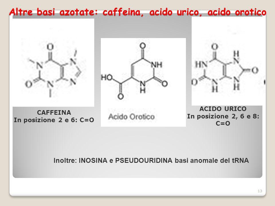 Altre basi azotate: caffeina, acido urico, acido orotico 13 CAFFEINA In posizione 2 e 6: C=O ACIDO URICO In posizione 2, 6 e 8: C=O Inoltre: INOSINA e