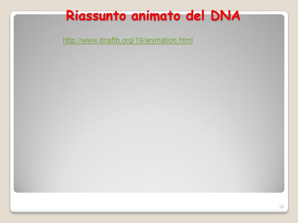 Riassunto animato del DNA 18 http://www.dnaftb.org/19/animation.html