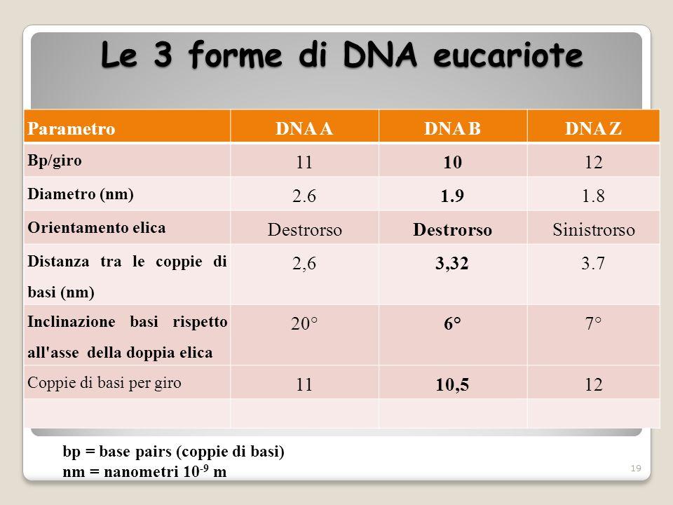 Le 3 forme di DNA eucariote 19 ParametroDNA ADNA BDNA Z Bp/giro 111012 Diametro (nm) 2.61.91.8 Orientamento elica Destrorso Sinistrorso Distanza tra l
