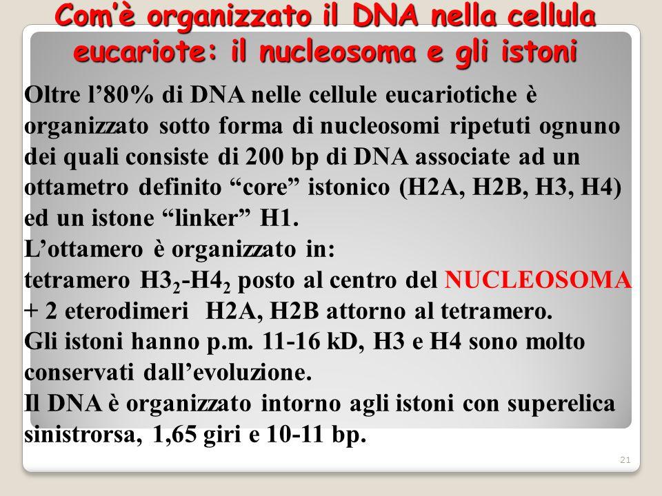 Comè organizzato il DNA nella cellula eucariote: il nucleosoma e gli istoni Oltre l80% di DNA nelle cellule eucariotiche è organizzato sotto forma di