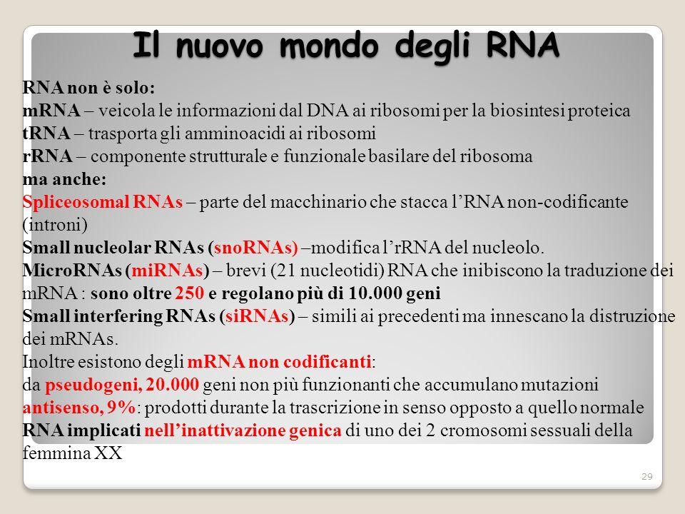 Il nuovo mondo degli RNA 29 RNA non è solo: mRNA – veicola le informazioni dal DNA ai ribosomi per la biosintesi proteica tRNA – trasporta gli amminoa