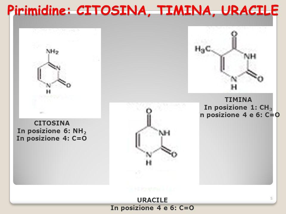 I NUCLEOSIDI Composti organici formati da una base purinica o pirimidinica e un pentoso (ribosio o desossiribosio), uniti con legame N-glicosidico.
