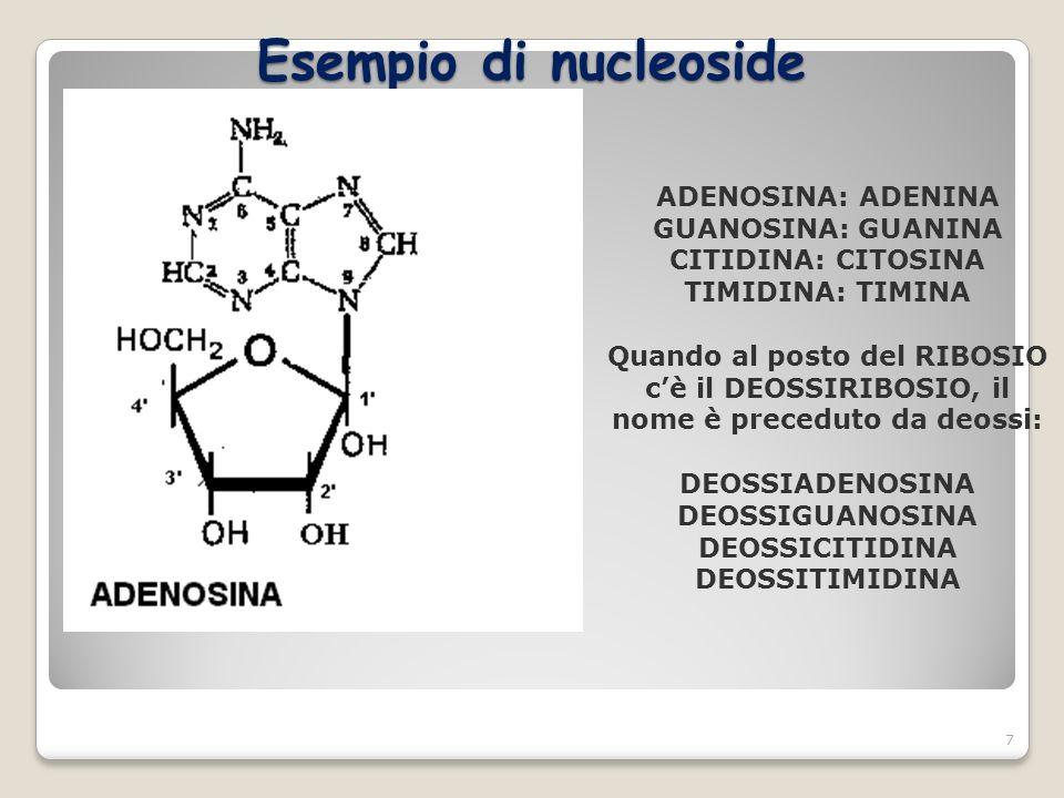 Esempio di nucleoside 7 ADENOSINA: ADENINA GUANOSINA: GUANINA CITIDINA: CITOSINA TIMIDINA: TIMINA Quando al posto del RIBOSIO cè il DEOSSIRIBOSIO, il