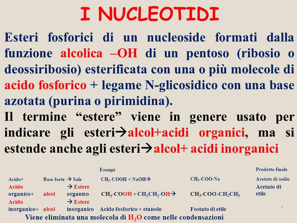 I NUCLEOTIDI Esteri fosforici di un nucleoside formati dalla funzione alcolica –OH di un pentoso (ribosio o deossiribosio) esterificata con una o più