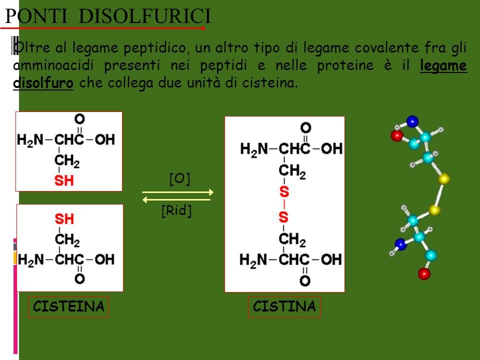 Oltre al legame peptidico, un altro tipo di legame covalente fra gli amminoacidi presenti nei peptidi e nelle proteine è il legame disolfuro che collega due unità di cisteina.