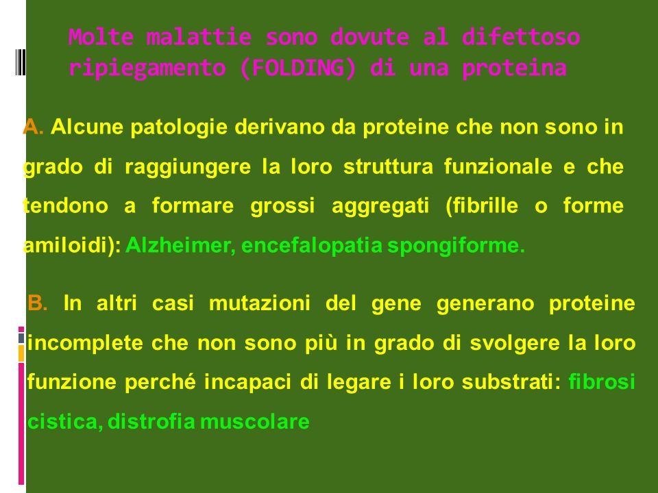 Molte malattie sono dovute al difettoso ripiegamento (FOLDING) di una proteina A.