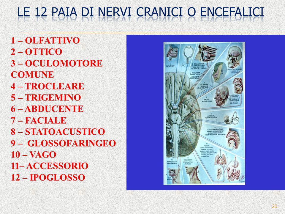 26 1 – OLFATTIVO 2 – OTTICO 3 – OCULOMOTORE COMUNE 4 – TROCLEARE 5 – TRIGEMINO 6 – ABDUCENTE 7 – FACIALE 8 – STATOACUSTICO 9 – GLOSSOFARINGEO 10 – VAG