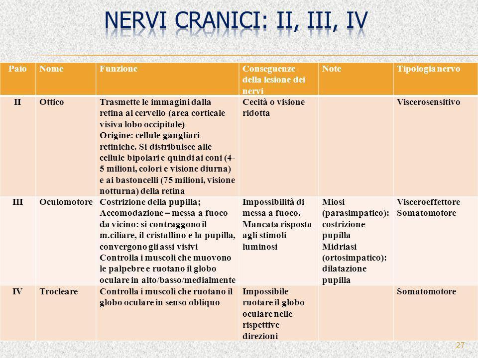 27 PaioNomeFunzioneConseguenze della lesione dei nervi NoteTipologia nervo IIOtticoTrasmette le immagini dalla retina al cervello (area corticale visi