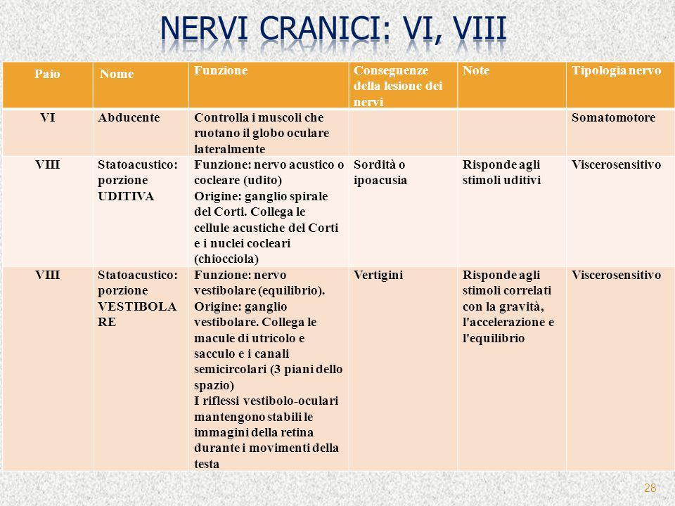 28 PaioNome FunzioneConseguenze della lesione dei nervi NoteTipologia nervo VIAbducenteControlla i muscoli che ruotano il globo oculare lateralmente S