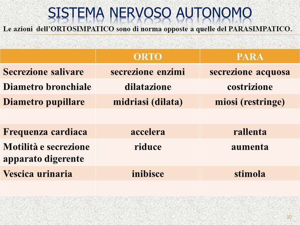 30 Le azioni dellORTOSIMPATICO sono di norma opposte a quelle del PARASIMPATICO. ORTOPARA Secrezione salivaresecrezione enzimisecrezione acquosa Diame