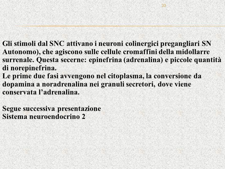 33 Gli stimoli dal SNC attivano i neuroni colinergici pregangliari SN Autonomo), che agiscono sulle cellule cromaffini della midollarre surrenale. Que