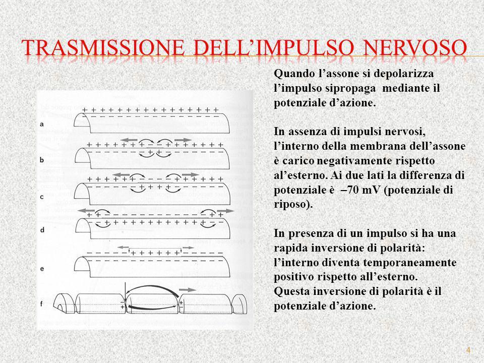 15 Origine nervi Assone pre- gangliare Post-gangliare neurotrasmettitori Reg.