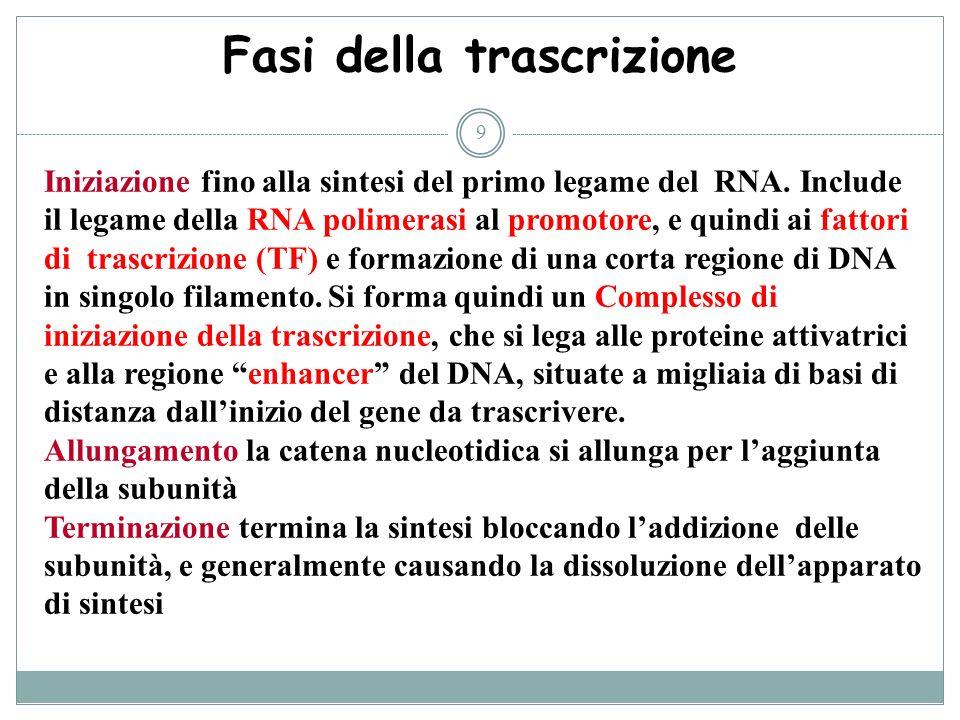 9 Fasi della trascrizione Iniziazione fino alla sintesi del primo legame del RNA. Include il legame della RNA polimerasi al promotore, e quindi ai fat