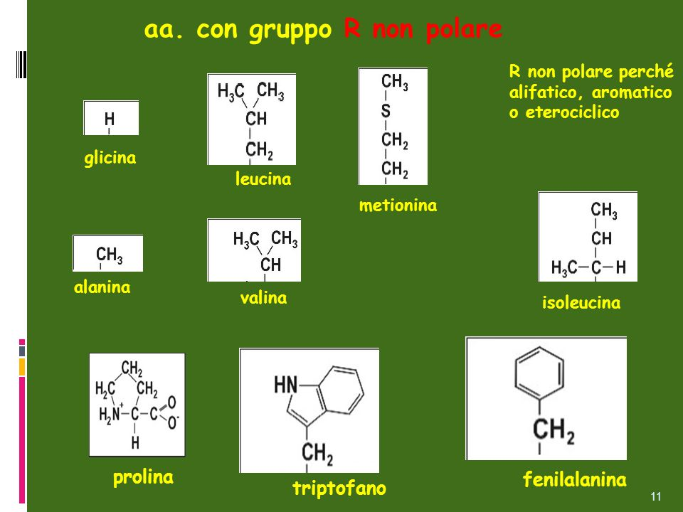 alanina isoleucina leucina glicina metionina aa. con gruppo R non polare valina fenilalanina prolina triptofano R non polare perché alifatico, aromati