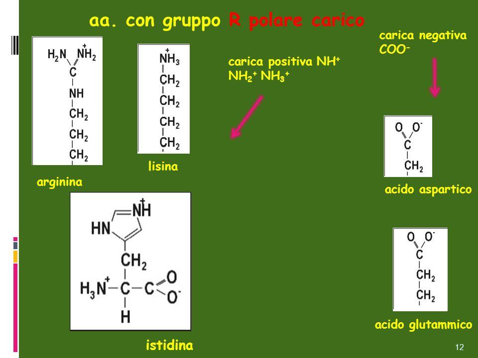 lisina aa. con gruppo R polare carico arginina acido aspartico acido glutammico istidina carica positiva NH + NH 2 + NH 3 + 12 carica negativa COO -