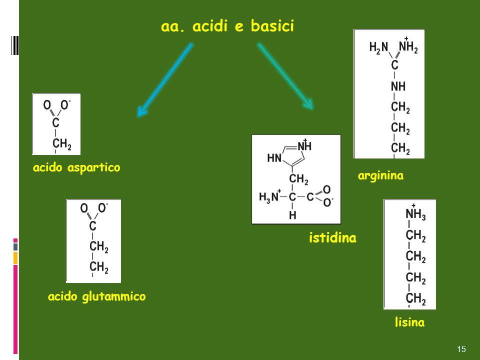 aa. acidi e basici acido aspartico acido glutammico arginina lisina istidina 15