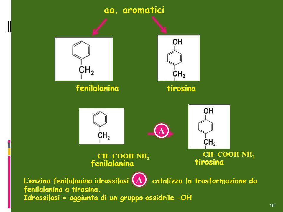 aa. aromatici tirosina fenilalanina 16 Lenzina fenilalanina idrossilasi catalizza la trasformazione da fenilalanina a tirosina. Idrossilasi = aggiunta