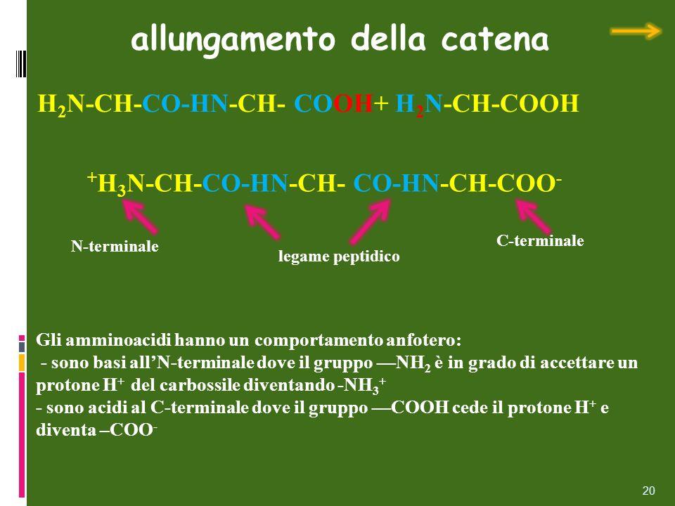 20 allungamento della catena Gli amminoacidi hanno un comportamento anfotero: - sono basi allN-terminale dove il gruppo NH 2 è in grado di accettare u