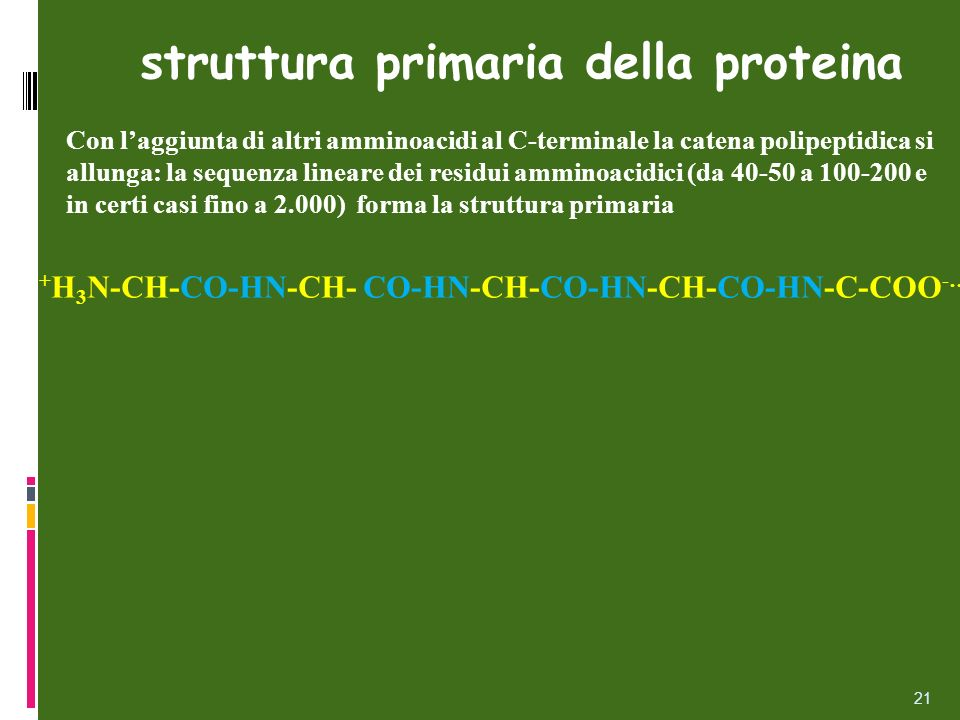 21 struttura primaria della proteina Con laggiunta di altri amminoacidi al C-terminale la catena polipeptidica si allunga: la sequenza lineare dei res