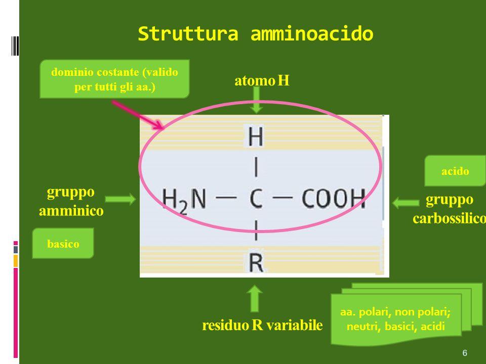 Struttura amminoacido atomo H gruppo amminico gruppo carbossilico residuo R variabile aa. polari, non polari; neutri, basici, acidi acido basico domin