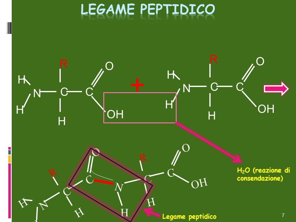 CC N H H H O OH R CC N H H H O R + C C N H H H O R N C C H O R H H 2 O (reazione di consendazione) Legame peptidico 7