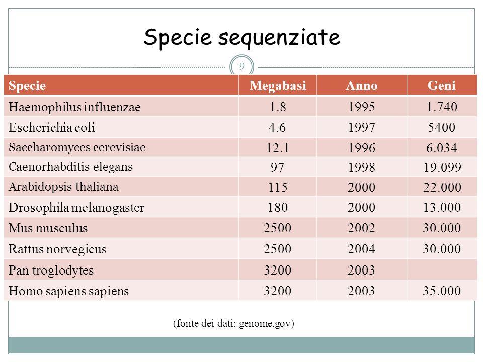 Specie sequenziate 9 (fonte dei dati: genome.gov) Specie MegabasiAnnoGeni Haemophilus influenzae 1.819951.740 Escherichia coli 4.619975400 Saccharomyc