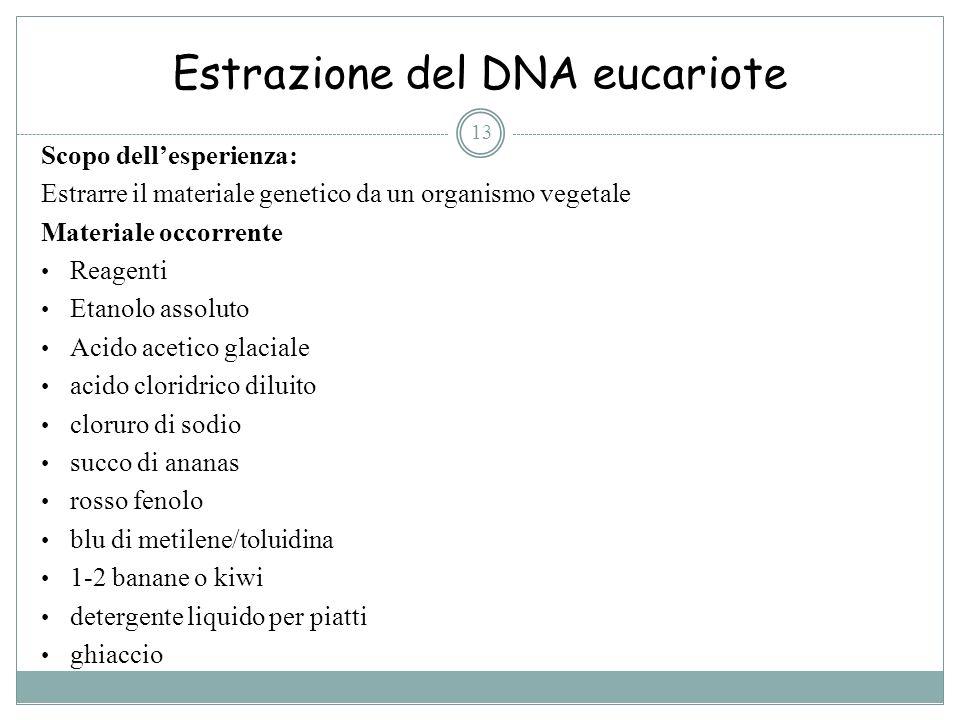 Estrazione del DNA eucariote 13 Scopo dellesperienza: Estrarre il materiale genetico da un organismo vegetale Materiale occorrente Reagenti Etanolo as