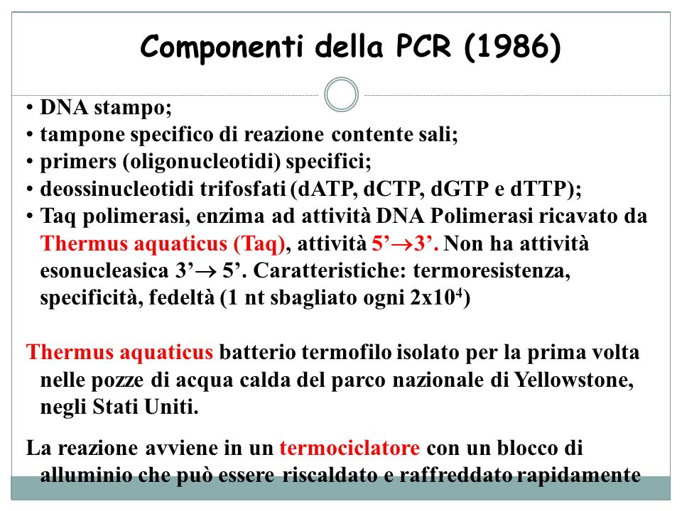 Componenti della PCR (1986) DNA stampo; tampone specifico di reazione contente sali; primers (oligonucleotidi) specifici; deossinucleotidi trifosfati