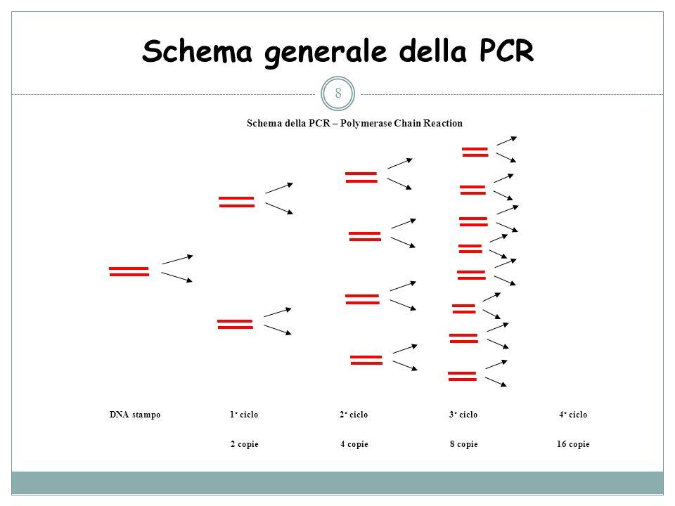 Schema generale della PCR 8 Schema della PCR – Polymerase Chain Reaction DNA stampo 1° ciclo2° ciclo3° ciclo4° ciclo 2 copie4 copie8 copie16 copie