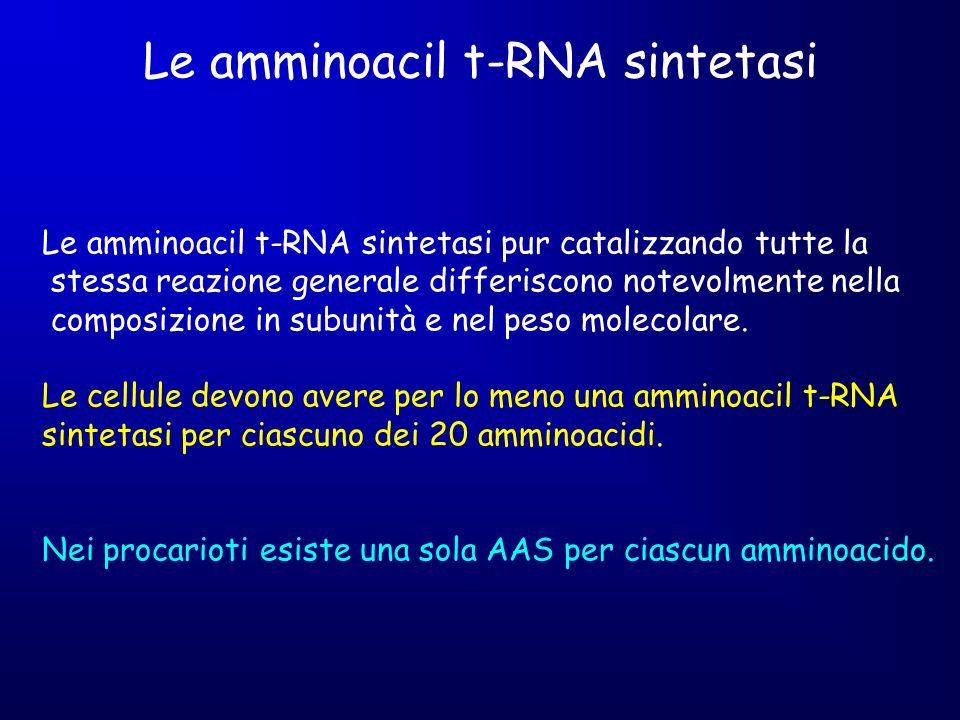 Le amminoacil t-RNA sintetasi Le amminoacil t-RNA sintetasi pur catalizzando tutte la stessa reazione generale differiscono notevolmente nella composi
