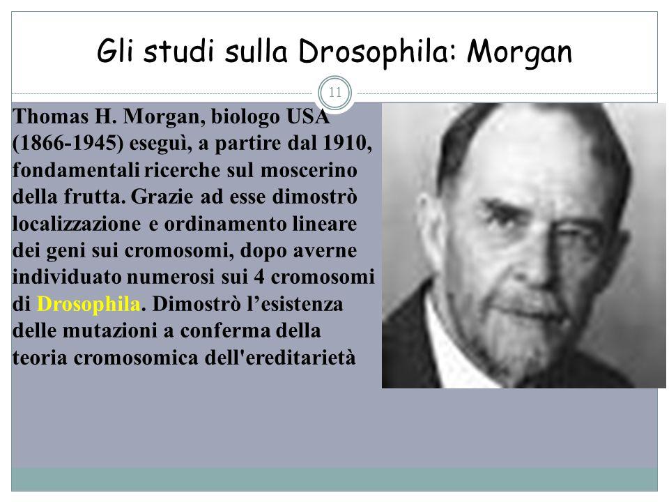 Gli studi sulla Drosophila: Morgan 11 Thomas H. Morgan, biologo USA (1866-1945) eseguì, a partire dal 1910, fondamentali ricerche sul moscerino della