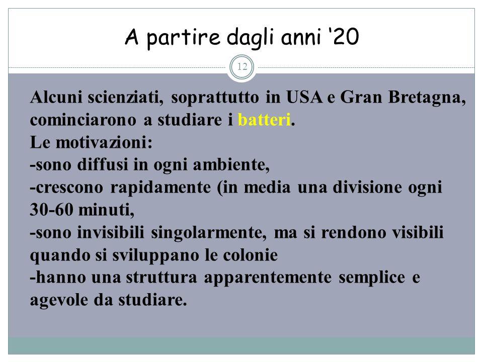 A partire dagli anni 20 12 Alcuni scienziati, soprattutto in USA e Gran Bretagna, cominciarono a studiare i batteri. Le motivazioni: -sono diffusi in