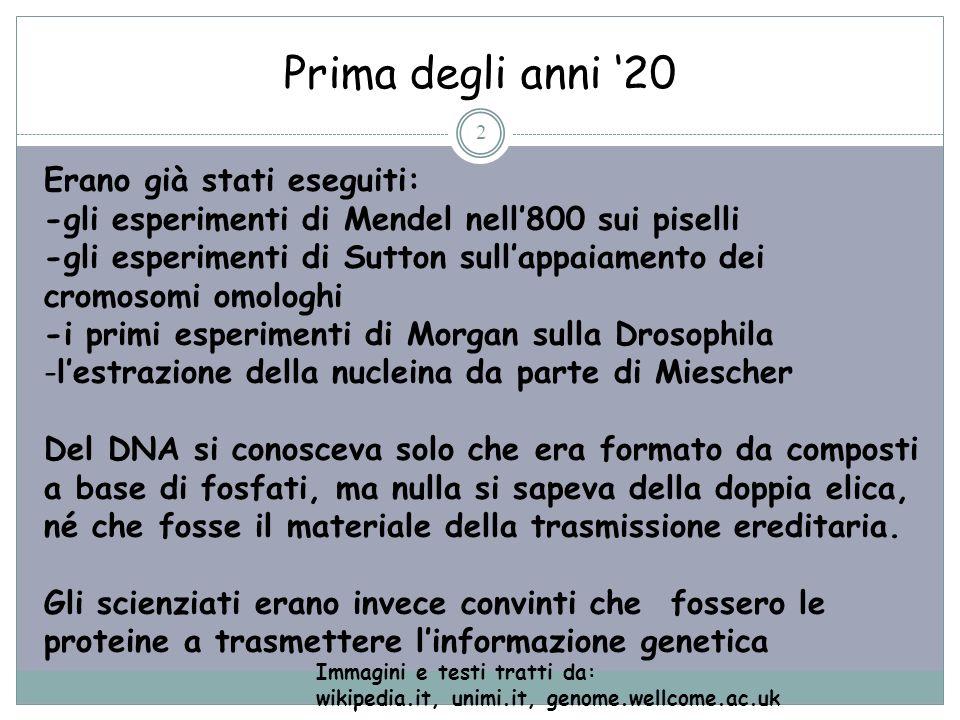 Prima degli anni 20 2 Erano già stati eseguiti: -gli esperimenti di Mendel nell800 sui piselli -gli esperimenti di Sutton sullappaiamento dei cromosom