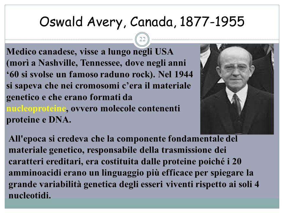 Oswald Avery, Canada, 1877-1955 22 Medico canadese, visse a lungo negli USA (morì a Nashville, Tennessee, dove negli anni 60 si svolse un famoso radun