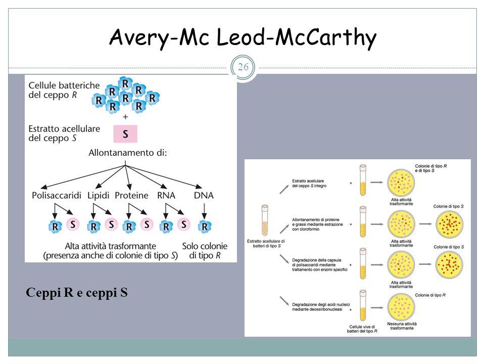 Avery-Mc Leod-McCarthy 26 Ceppi R e ceppi S