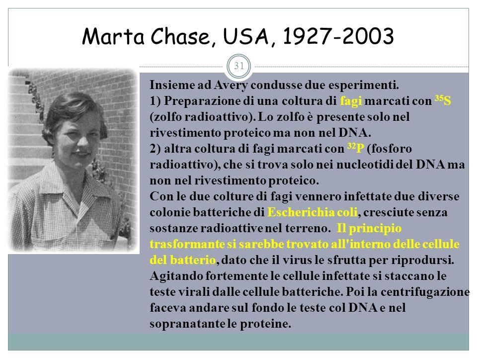 Marta Chase, USA, 1927-2003 31 Insieme ad Avery condusse due esperimenti. 1) Preparazione di una coltura di fagi marcati con 35 S (zolfo radioattivo).