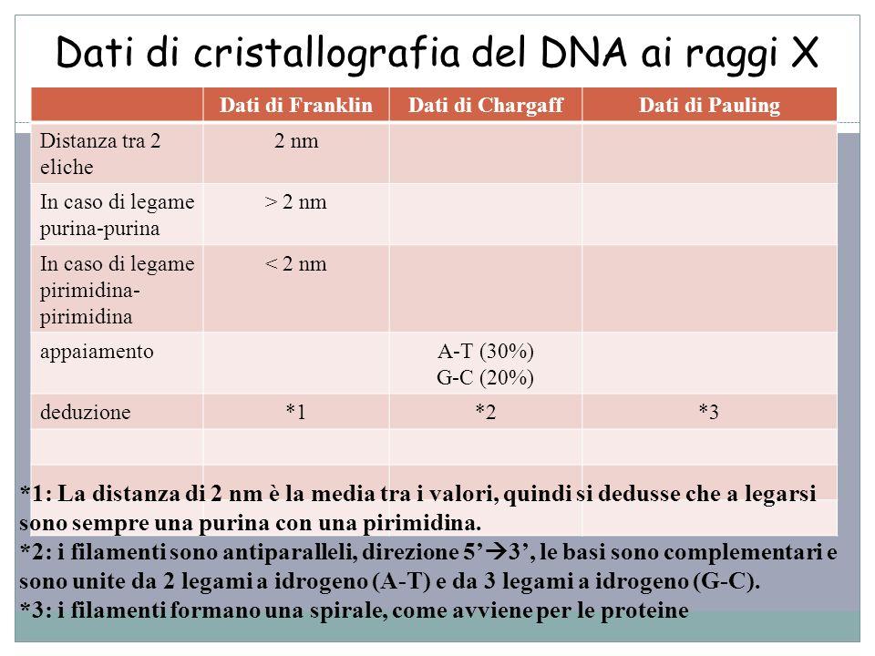 Dati di cristallografia del DNA ai raggi X 49 Dati di FranklinDati di ChargaffDati di Pauling Distanza tra 2 eliche 2 nm In caso di legame purina-puri