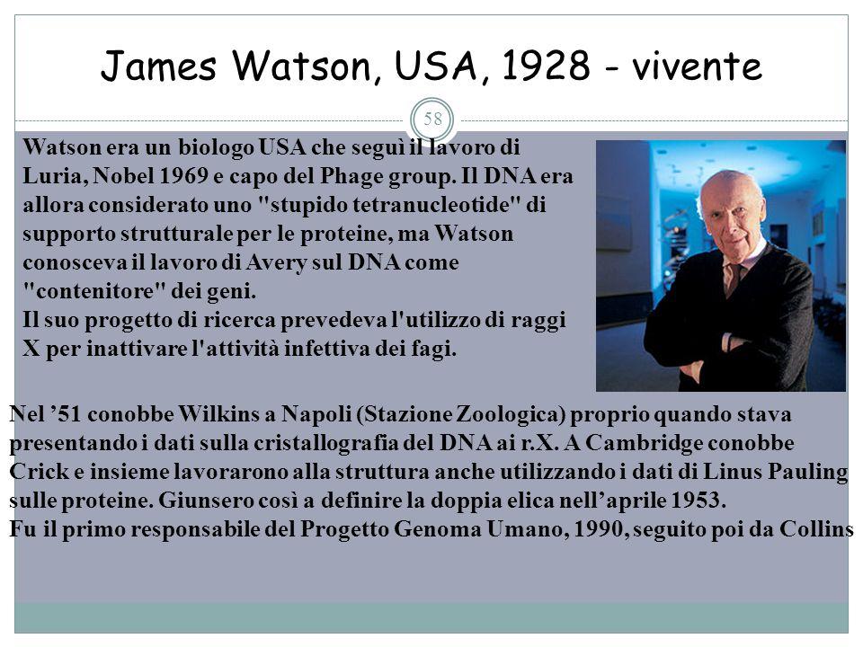 James Watson, USA, 1928 - vivente 58 Watson era un biologo USA che seguì il lavoro di Luria, Nobel 1969 e capo del Phage group. Il DNA era allora cons