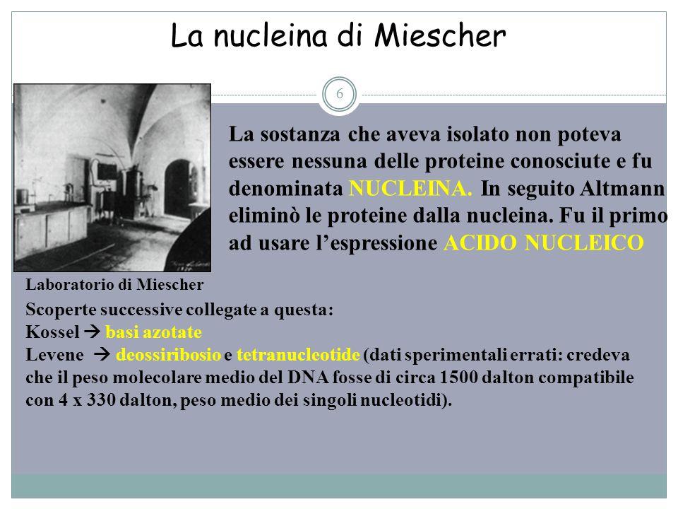 La nucleina di Miescher 6 La sostanza che aveva isolato non poteva essere nessuna delle proteine conosciute e fu denominata NUCLEINA. In seguito Altma