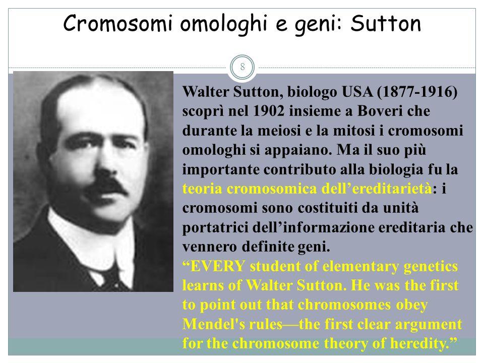 Cromosomi omologhi e geni: Sutton 8 Walter Sutton, biologo USA (1877-1916) scoprì nel 1902 insieme a Boveri che durante la meiosi e la mitosi i cromos